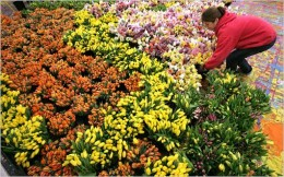 Brampton Flowers