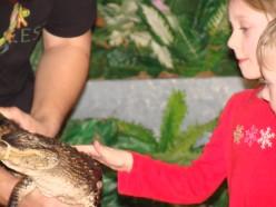 """Petting"" a crocodile."