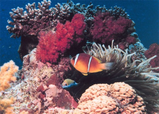 Coral reefs the Carbondioxide Sinks