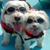 love2dogs profile image