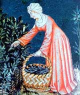 Woman gathering herbs for medieval medicine