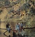 Classic Album Review:  Wild Life Wings