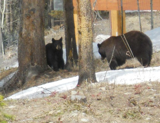 Mama and Baby Bear by a neighbor's deck.