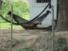 How did this dog get into this hammock?