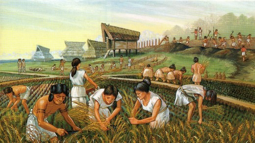 Collecting of rice Yayoi period.