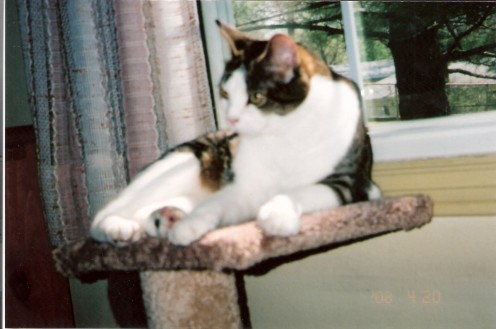 Olivia - 5 yrs.