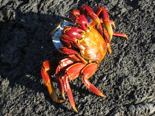 Don't be crabby-just write something.