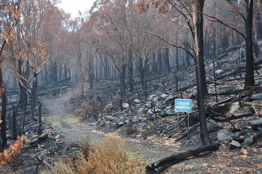 Lake Mountain toboggan run after 2009 Black Saturday bushfires.