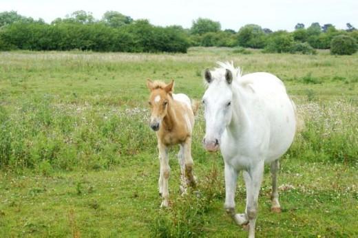 Albino Horse Picture