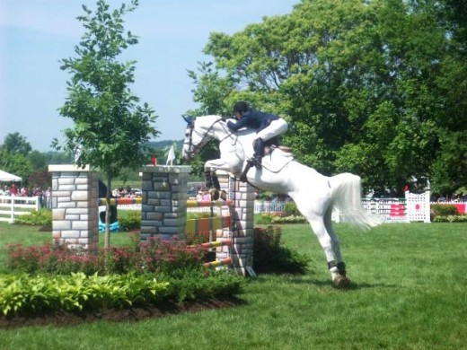 Equestrian Cream Horse Jumping Photo