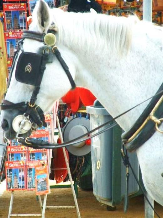 White British Horse