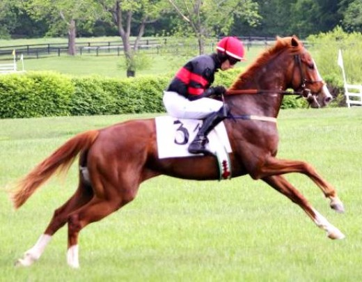 racing horse picture and red horse picture