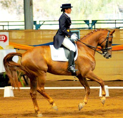 chestnut equestrian horse image