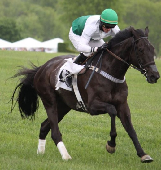 The Morab Horse Breed Racing