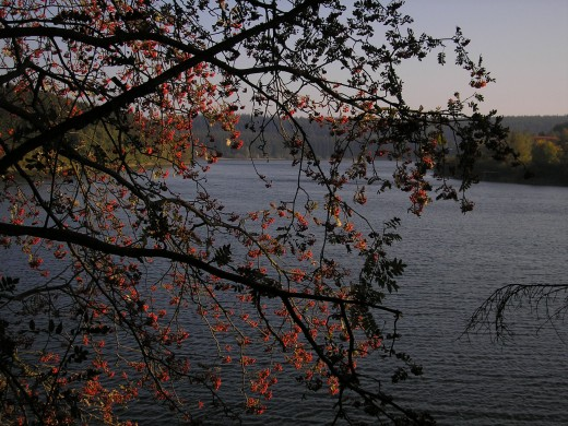 Buetgenbach's lake