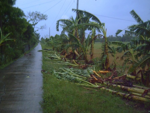 Destroyed vegetation (Photo by Travel Man)