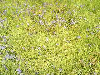 Grass pollen is the most common cause of hay fever symptoms