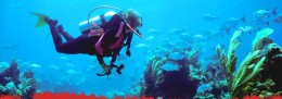 Scuba diving is fun but it doesnt have to be costly