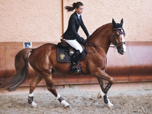 Charlotte Casiraghi on a magnifecent stallion. Photo by Mario Testino, from Vogue.com
