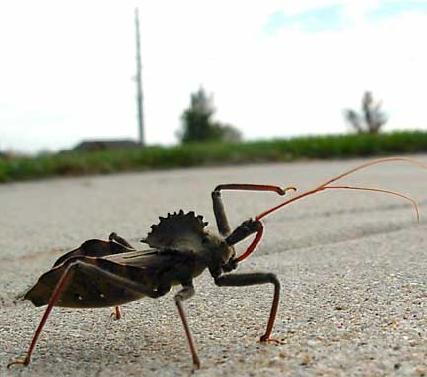 Assassin Bug - Point Man and tank!