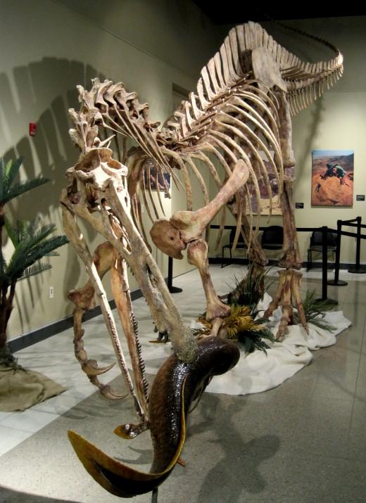 "Suchomimus ""crocodile mimic"" (fish eater)"