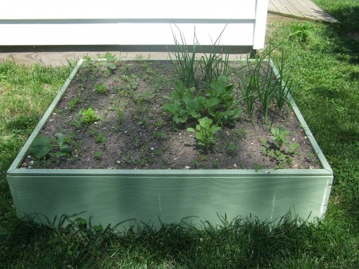 Vegetables at 21 days.  Radish will be ready in 7 days.  Then bush bean seeds will be planted.