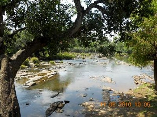 The River Cauvery at Dubare forest