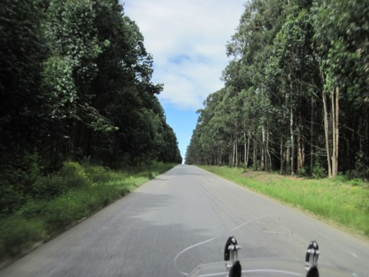 Large tracts of land are devoted to eucalyptus growth for the paper industry. Everything else is displaced in the ecosystem making this monoculture region a bio-diverse desert. Most of the wood will be made into toilet tissue. No food is grown here.