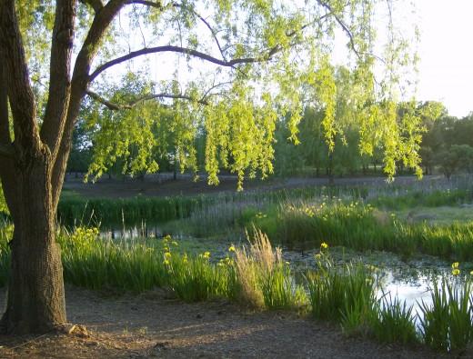 Taken at Lema Ranch walking trails.