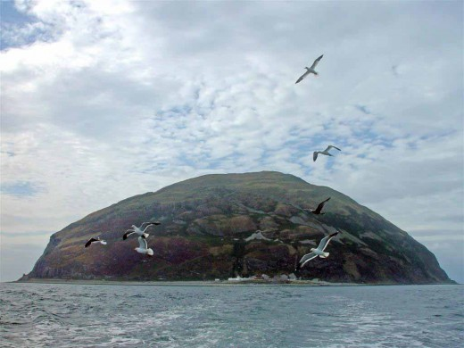 Seabirds flying away from the island.