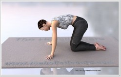Cat pose helps in toning your abdomen