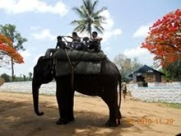 Elephant ride at Dubare forest