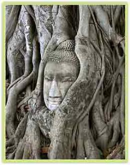 Bodhi tree in Gaya, India