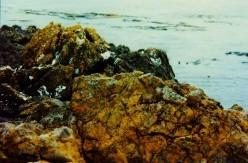 The rocky shoreline at Lime Kiln Lighthouse area.