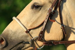 how to put on a horse bridle