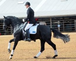 horseback riding position