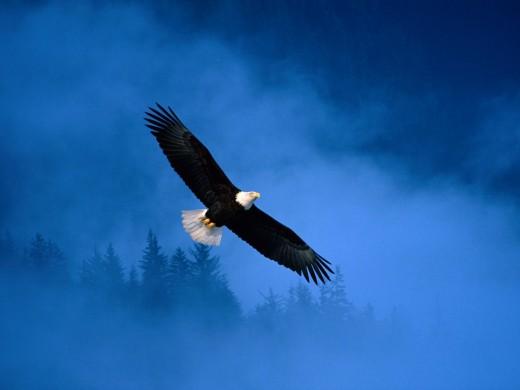 Flight o f the Eagle Leaves No Trace