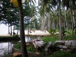 Nirvana Beach with rows of coconut trees.