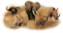 "The ""Big 5"" Of Africa"