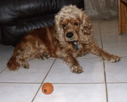 Kobi and the Red Ball (Apr. 2011)