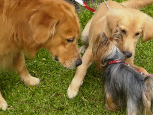 Dogs sniff one another when they meet.