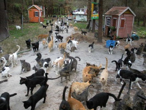 A real cat town I came across