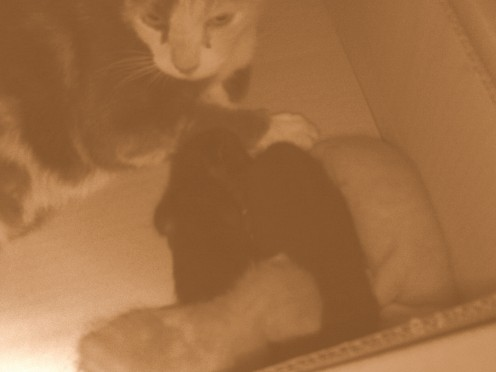 This photo came out redish, but I used photoshop to turn it in to a sepia and faded picture.  I absolutely love this picture of the cats.