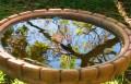Haiku: Four Seasons in the Garden