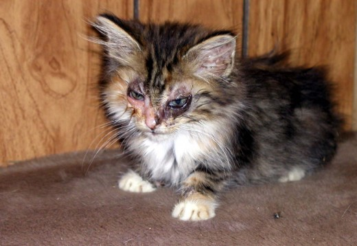 Katy, a week after being saved and a week after beginning medications.  She was very very sick.