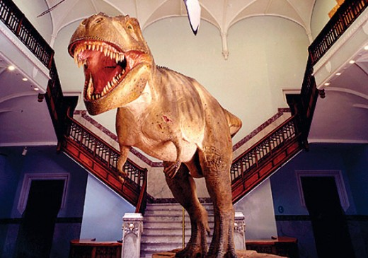 Museum of Nature. Filled with Dinosaurs, fossils, mammals, birds from the ages and much more
