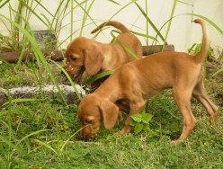 First place puppies should explore is the home garden.