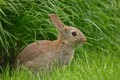 How to Treat Urinary Tract Infection in Rabbits