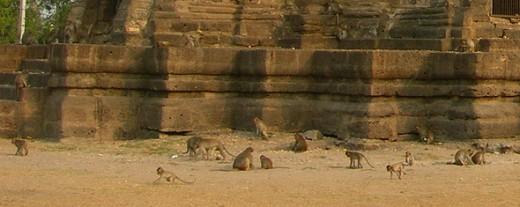 Monkeys at Phra Prang Sam Yord, Lopburi