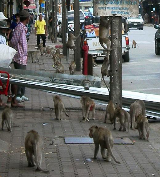 Monkeys roaming on the streets of Lopburi